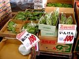 20050604-船橋市市場1・船橋中央卸売市場・ふなばし楽市-1024-DSC02476