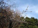 20051126-習志野市秋津5・秋津公園-1145-DSC08679