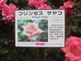 20050522-谷津バラ園・プリンセスサヤコ-1142-DSC01779