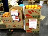 20051203-船橋中央卸売市場・ふなばし楽市-1012-DSC09608