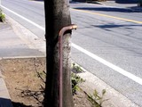 20050327-船橋市日の出2・くい込んだ街路樹-1055-DSC07394