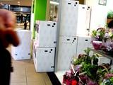 20050507-船橋市浜町2・ららぽーと1・フラワーショップ・樹里(三浦園芸)-1325-DSC09342