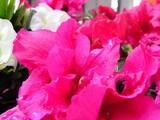 20050324-船橋市・ららストリート・春の花-0858-DSC07080