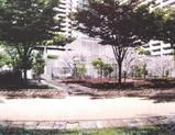 20050308-船橋市浜町2・ザウス跡開発・ゼファー・ワンダーベイシティサザン-0021-DSC06202