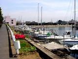 20050521-船橋市栄町1・路地の花-1240-DSC01614