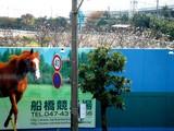 20051117-船橋競馬場・十月桜-0839-DSC07240