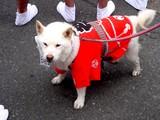 20050724-ふなばし市民まつり・はっぴの犬と猫-1708-DSC02736