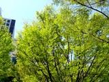 20050414-浦安市入船1・JR京葉線JR新浦安駅南口-0958-DSC08566