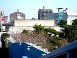 20051116-船橋競馬場・十月桜-0841-DSC07124