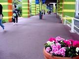 20050328-船橋市・ららストリート・春の花-0852-DSC07463