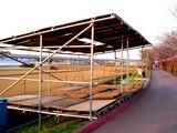 20050326-船橋市・海老川・桜まつり-1733-DSC07268