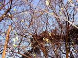 20050326-船橋市・海老川・桜まつり-1729-DSC07253