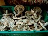 20051228-船橋市本町4・厳島神社・しめ飾り-1503-DSC02502