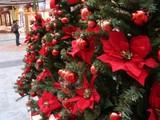 20051112-ビビットスクエア・クリスマス-1437-DSC06655