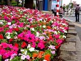 20050508-船橋市浜町2・ららぽーと・花壇とポール-1514-DSC09590