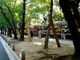20051104-葛飾八幡宮・市川市菊花展-1439-DSC05251