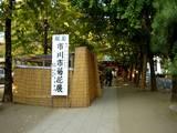 20051104-葛飾八幡宮・市川市菊花展-1436-DSC05226