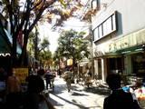 20051210-習志野市谷津・谷津商店会-1219-DSC00246