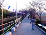 20050326-船橋市・海老川・桜まつり-1732-DSC07265