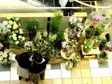 20050507-船橋本町1・フラワーショップ・ピエールポント-1643-DSC09381