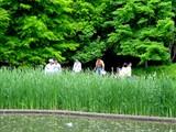 20050529-習志野市香澄・習志野緩衝緑地・香澄公園・ショウブ池・ハナショウブ-1132-DSC02188