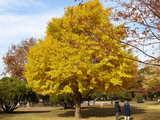 20051126-習志野市谷津3・谷津公園・黄葉-1125-DSC08624