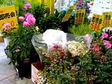 20050605-船橋市浜町2・ビビットスクエア・スーパーバリュー・花の即売会-1700-DSC02767