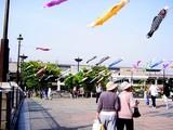 20050505-東京都江戸川区臨海町6・葛西臨海公園・こいのぼり-1550-DSC01027