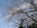 20051126-習志野市秋津5・秋津公園-1145-DSC08680