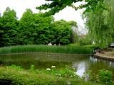 20050529-習志野市香澄・習志野緩衝緑地・香澄公園・ショウブ池・ハナショウブ-1131-DSC02187