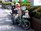 20050416-船橋市若松1・犬たち-0933-DSC08656