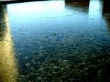 20051214-船橋市浜町・初氷-DSC00651