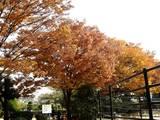 20051104-市川市・行徳駅前公園-1231-DSC04991E
