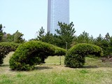 20050416-千葉市美浜区美浜・幕張海浜公園-1156-DSC08990