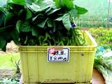 20050604-船橋市夏見・市場・海老川造形市民まつり-1046-DSC02518