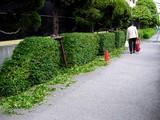 20050514-船橋市浜町2・ららぽーと私道の植栽-1548-DSC00057