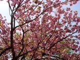 20050424-船橋市本町・天沼弁天池公園-1112-DSC09379