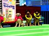 20050505-船橋市浜町2・ららぽーとウェスト・ペットエコ横浜・ワンちゃんのファッションショー-1335-DSC00742