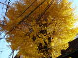 20051205-船橋市本町1・稲荷神社・黄葉-1218-DSC09985