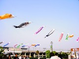 20050505-東京都江戸川区臨海町6・葛西臨海公園・こいのぼり-1550-DSC01026