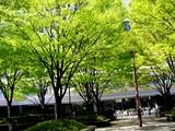 20050414-浦安市入船1・JR京葉線JR新浦安駅南口-0958-DSC08565