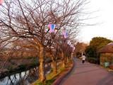 20050326-船橋市・海老川・桜まつり-1729-DSC07252
