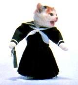 なめ猫・女子学生