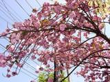 20050424-船橋市本町・天沼弁天池公園-1113-DSC09381
