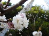 20051126-習志野市秋津5・秋津公園-1144-DSC08671