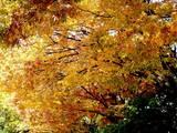 20051104-市川市・行徳駅前公園-1230-DSC04982E