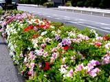 20050429-船橋市浜町・ららぽーと・ツツジ-1010-DSC09605