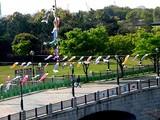 20050422-東京都江戸川区臨海町6・葛西臨海公園・こいのぼり-0823-DSC08863