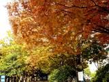 20051104-市川市・行徳駅前公園-1230-DSC04986E