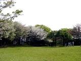 20050416-習志野市・習志野緩衝緑地・秋津公園-0948-DSC08662
